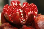 Pomegranate red seeds contain antioxidants