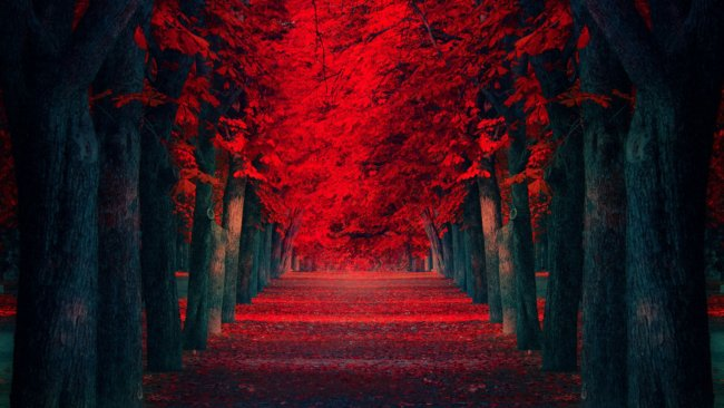 road wallpaper red